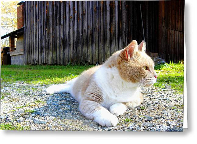 Toby Old Mill Cat Greeting Card by Sandi OReilly