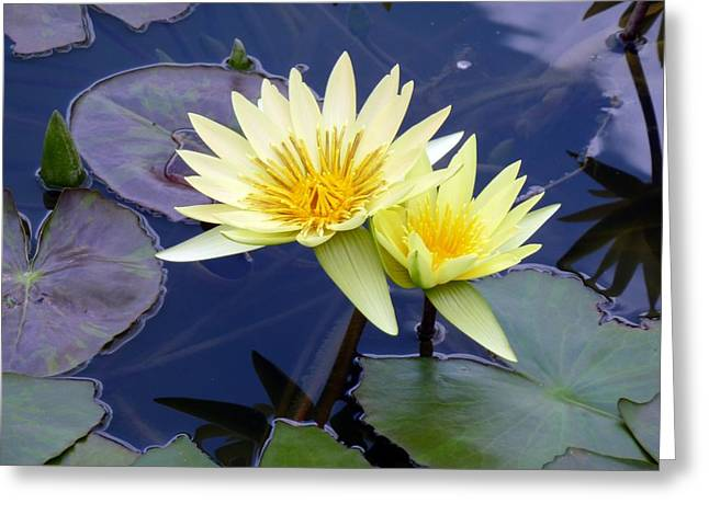 Lilly Pads Greeting Cards - Together Again Greeting Card by Tim Mattox