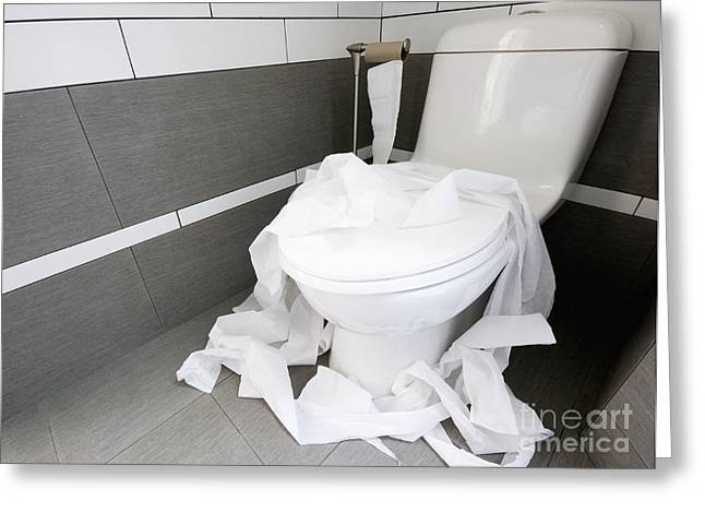 Domestic Bathroom Greeting Cards - Toilet Paper Strewn in a Bathroom Greeting Card by Marlene Ford
