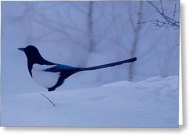Magpies. Snow Greeting Cards - Tom Greeting Card by Eric Tressler