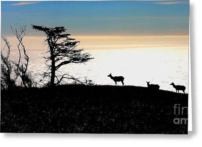 Tule Elks Greeting Cards - Tomales Bay Tule Elks Greeting Card by Wingsdomain Art and Photography