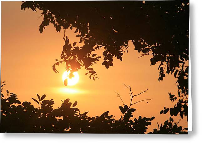 Points Pyrography Greeting Cards - Tomas Point Sunset Greeting Card by Valia Bradshaw