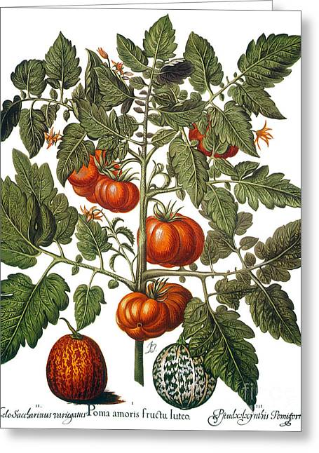Watermelon Greeting Cards - Tomato & Watermelon 1613 Greeting Card by Granger