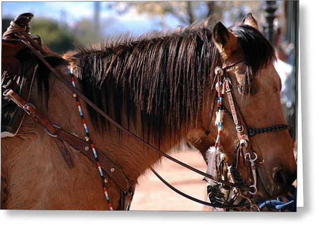 Western Tie Greeting Cards - Tombstone Horse Greeting Card by Anthony Citro