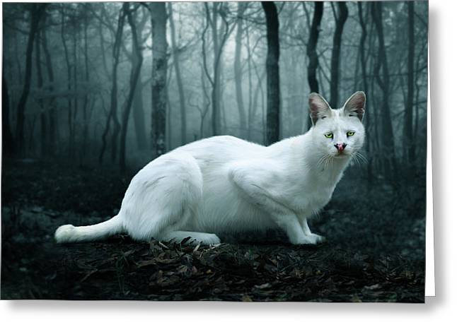 White Serval Greeting Cards - Tonga Greeting Card by Big Cat Rescue