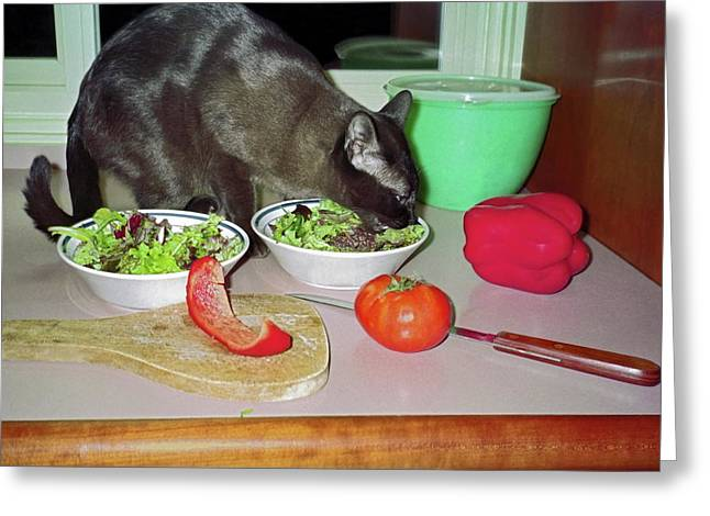 Tonkinese Cat Greeting Cards - Tonkinese Cat Eating Salad Greeting Card by Sally Weigand