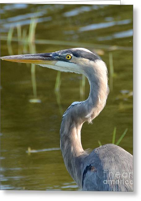 Too Close For Comfort Greeting Card by Carol  Bradley