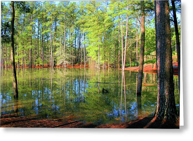 Flooding Photographs Greeting Cards - Too Much Rain Greeting Card by Kristin Elmquist
