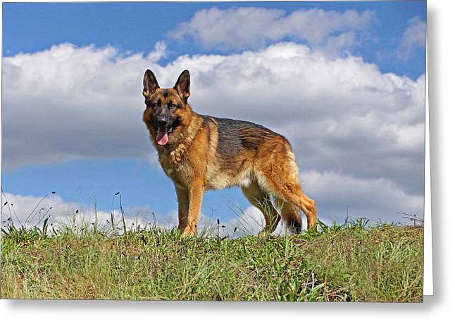 Indiana German Shepherds Greeting Cards - Top of the Hill Greeting Card by Sandy Keeton