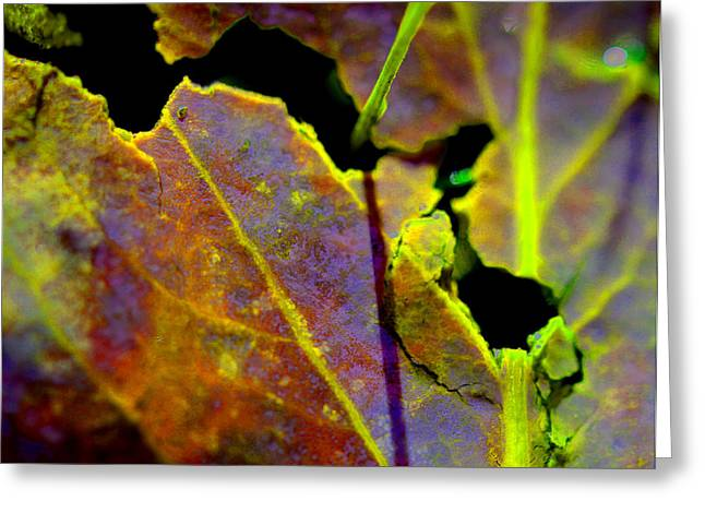 Torn Leaf Greeting Card by Marie Jamieson