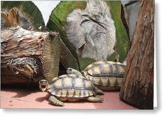 Tortoise Yawn Greeting Card by Arte Ivanna