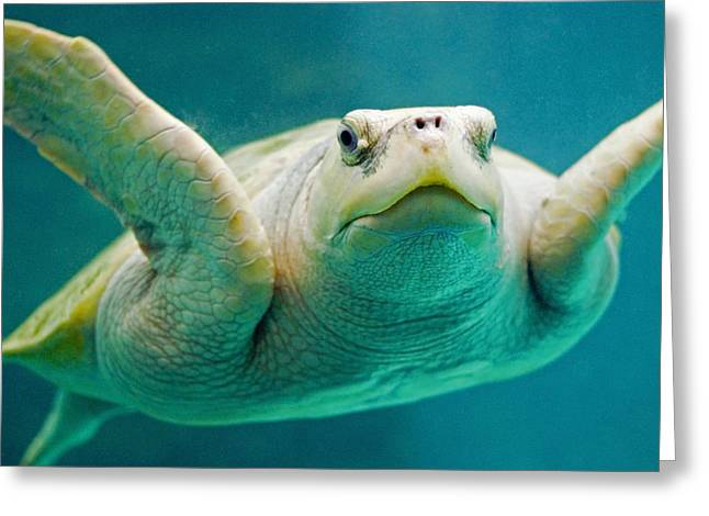 Beach Greeting Cards - Tortuga Sonrisa Greeting Card by Skip Hunt