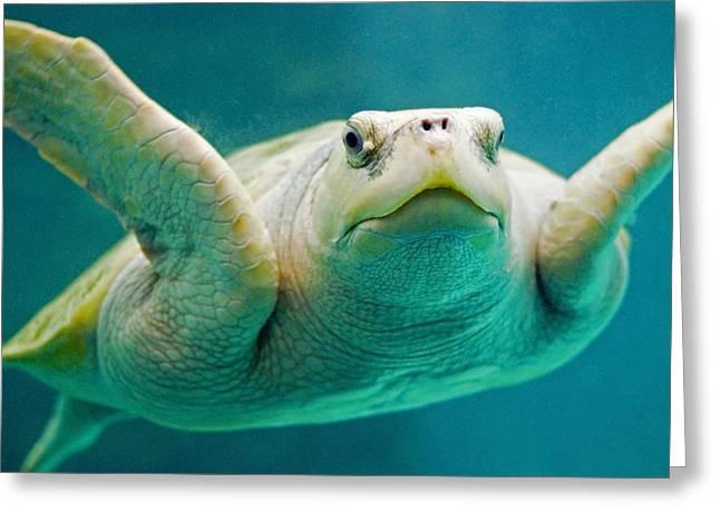 Tortuga Sonrisa Greeting Card by Skip Hunt