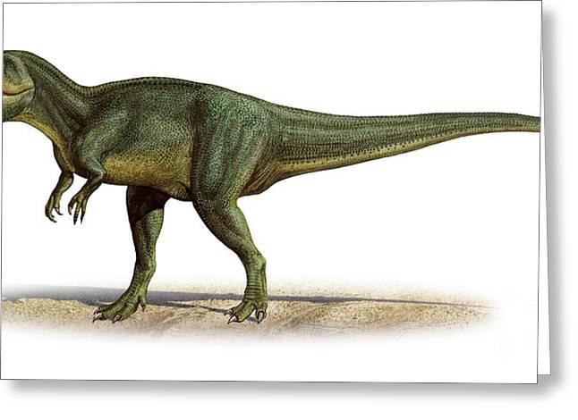 Torvosaurus Tanneri, A Prehistoric Era Greeting Card by Sergey Krasovskiy