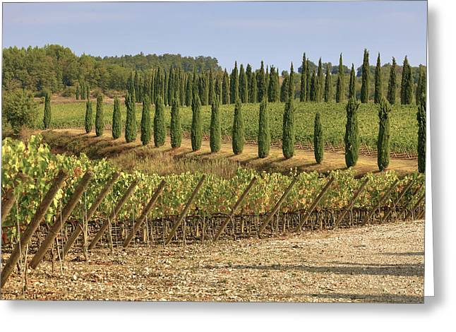 Vineyard Photographs Greeting Cards - Toscana Greeting Card by Joana Kruse