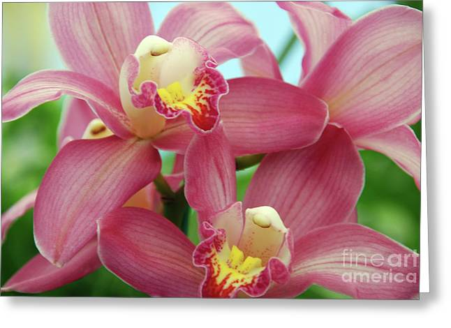 Botanical Greeting Cards - Touch me Greeting Card by Susanne Van Hulst