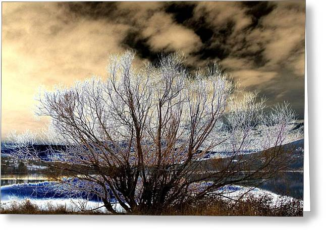 Willow Lake Digital Art Greeting Cards - Touch Of Frost Greeting Card by Will Borden