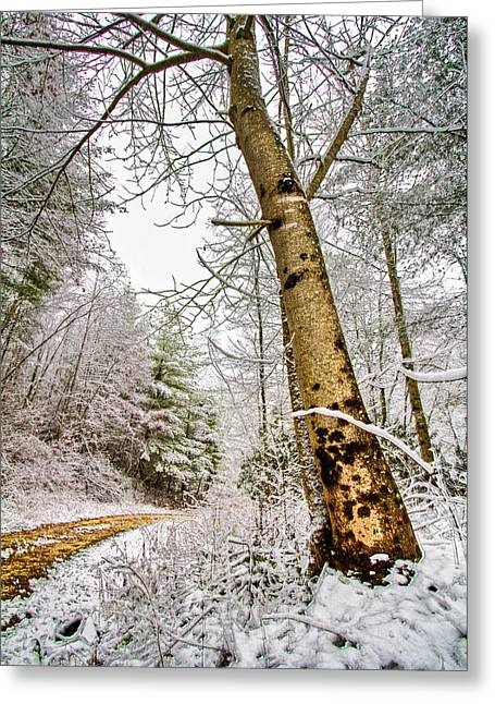 Wintry Photographs Greeting Cards - Touch of Gold Greeting Card by Debra and Dave Vanderlaan