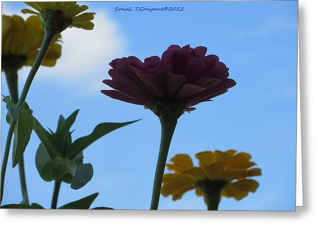 Flowers Against The Sky Greeting Cards - Touch of Sky Greeting Card by Sonali Gangane