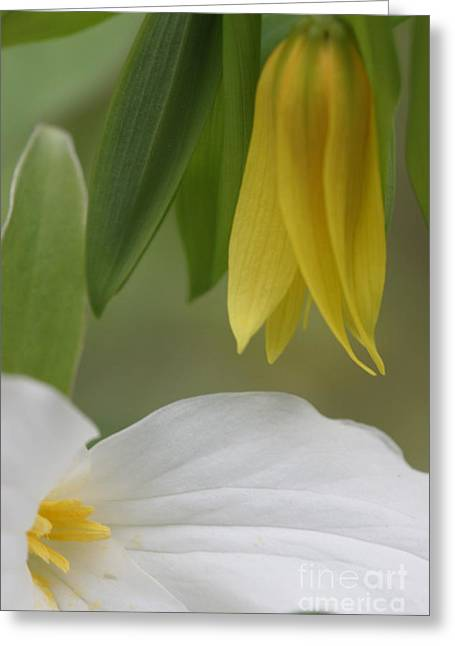 Ewing Greeting Cards - Touch Of Yellow Greeting Card by Christopher Ewing