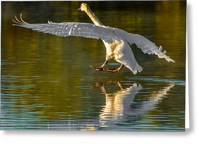 Touching Down Greeting Card by Brian Stevens