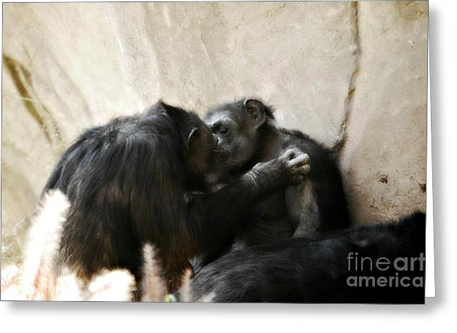 Touching Moment Gorillas Kissing Greeting Card by Peggy  Franz