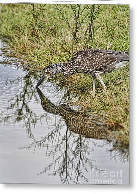 Crowned Heron Greeting Cards - Touching Nose to Nose Greeting Card by Deborah Benoit