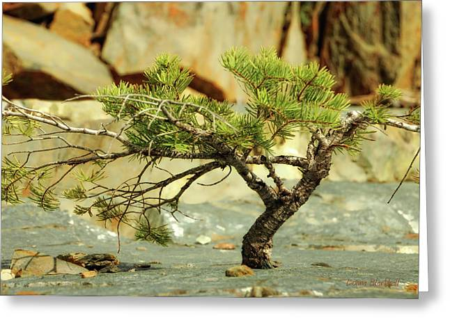 Growing Out Of Rock Greeting Cards - Tough Upbringing Greeting Card by Donna Blackhall