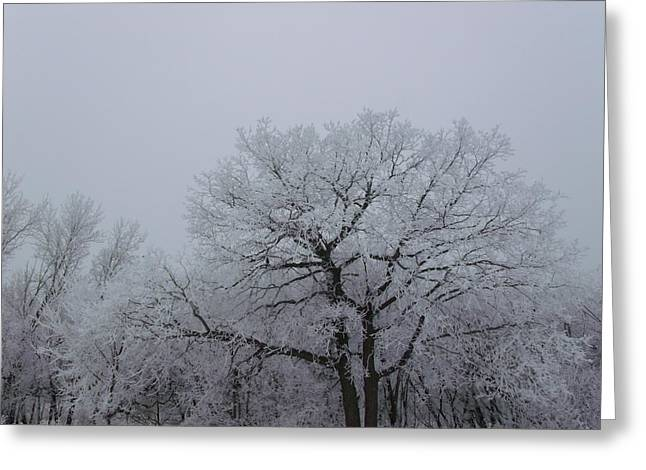 Towering Winter Landscape Greeting Card by Brian  Maloney