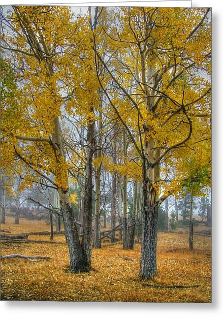 Aspens In Fall Greeting Cards - Towers of Gold Greeting Card by Ken Smith