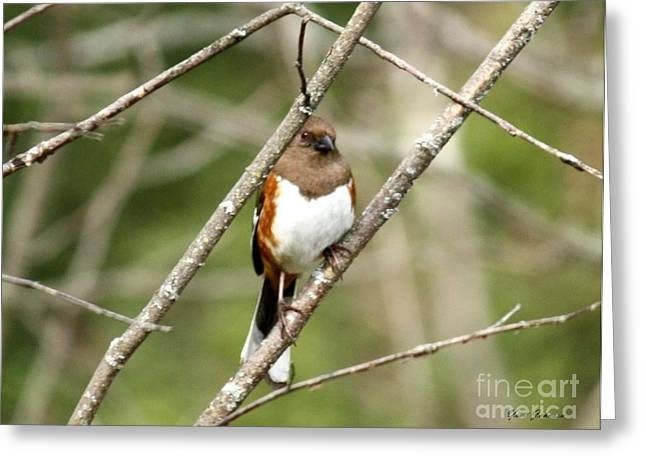 Brown Towhee Greeting Cards - Towhee Female Greeting Card by Yumi Johnson