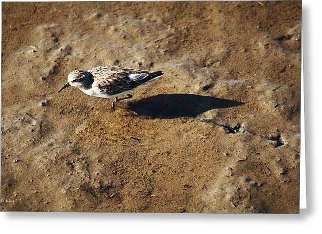Wildlife Genre Greeting Cards - Tracks In The Mud Greeting Card by Roena King