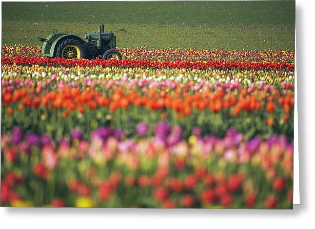 Ground Level Greeting Cards - Tractor In Tulip Field Greeting Card by Craig Tuttle
