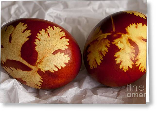 Technique Greeting Cards - Traditional easter eggs Greeting Card by Blink Images