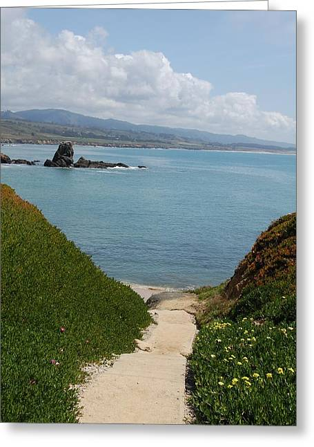 Santa Cruz Art Greeting Cards - Trail down to beach Greeting Card by James Harper