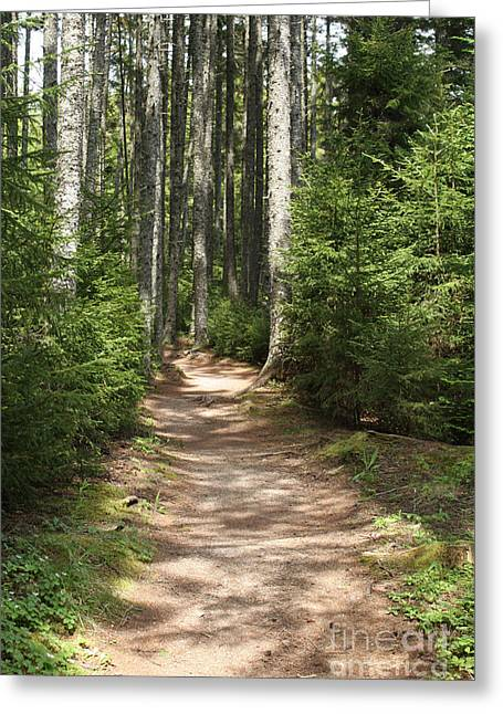 Coastal Forest Greeting Cards - Trail In The Woods Greeting Card by Ted Kinsman