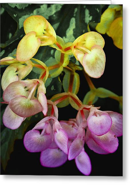 Trailing Greeting Cards - Trailing Color Greeting Card by David Patterson