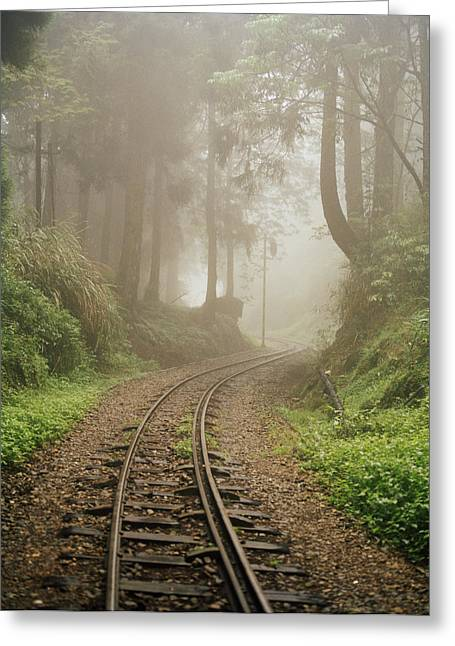 Intervention Greeting Cards - Train Tracks Found On The Forest Floor Greeting Card by Justin Guariglia