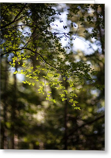 Forest Detail Greeting Cards - Tranquil Forest Greeting Card by Mike Reid
