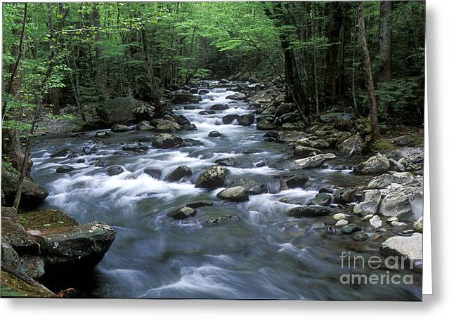 Eastern United States Greeting Cards - Tranquil Moments on Little Pigeon Creek Greeting Card by Sandra Bronstein