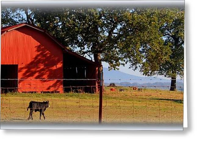 Arkansas Greeting Cards - Tranquil Morn Greeting Card by Betty Northcutt