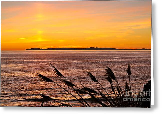 Tranquility  Greeting Card by Johanne Peale