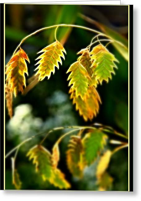 Translucence Greeting Cards - Translucent Grain Greeting Card by Cindy Wright