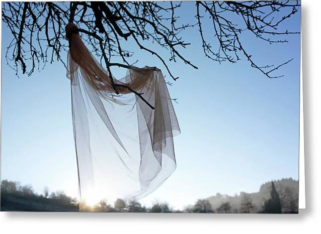 Bare Tree Photographs Greeting Cards - Transparent fabric Greeting Card by Bernard Jaubert