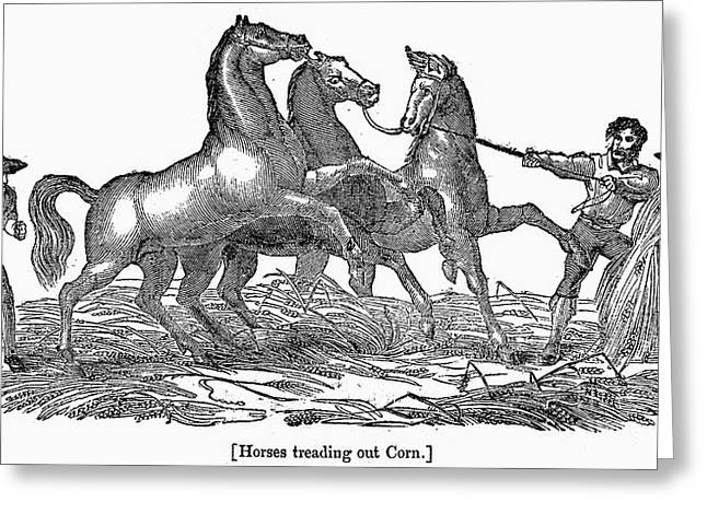 Treading Corn, 1833 Greeting Card by Granger