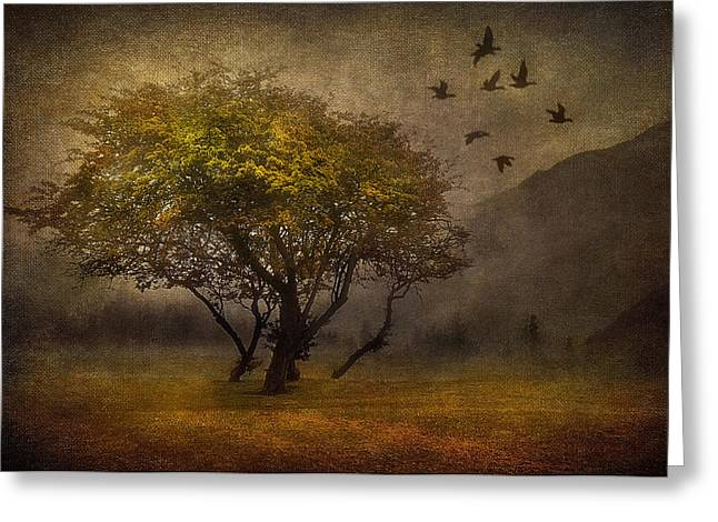 Fog Mist Mixed Media Greeting Cards - Tree and Birds Greeting Card by Svetlana Sewell
