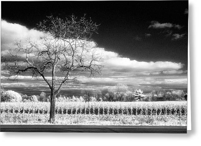 Jeff Holbrook Greeting Cards - Tree and Corn Field Greeting Card by Jeff Holbrook