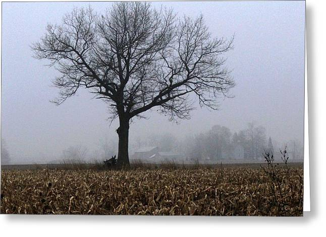 Indiana Trees Greeting Cards - Tree and Fog Greeting Card by Michael L Kimble