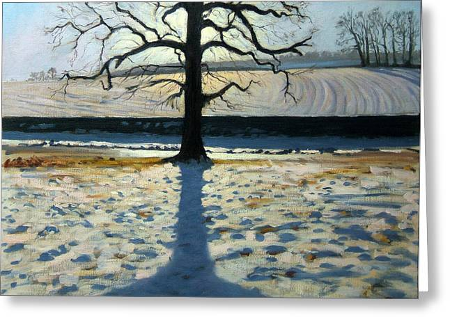 Tree and Shadow Calke Abbey Derbyshire Greeting Card by Andrew Macara