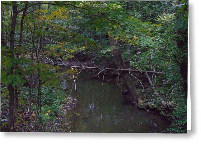 Crick Greeting Cards - Tree and Stream Greeting Card by Michael L Kimble
